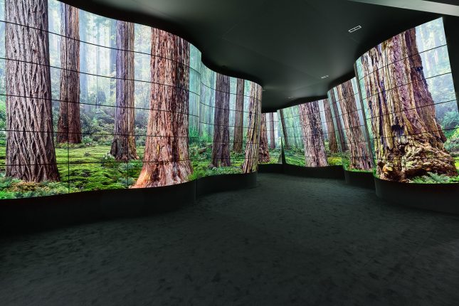 A dark wavy tunnel made of curved LED TVs displaying a forest scene.